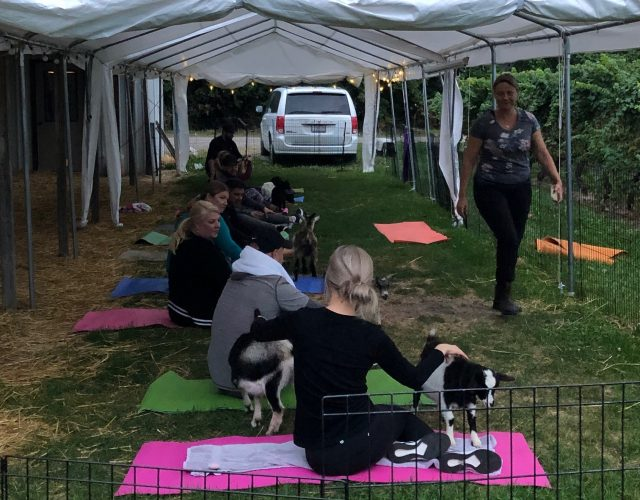 Goat Yoga with Revel Realty